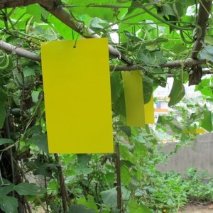 "6x12"" Yellow Sticky Strips, 125 each"