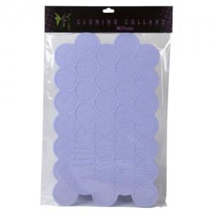Ez Clone Colored Cloning Collars Purple  35perBag