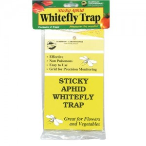 Sticky Whitefly Trap 3perPack  1   24perCs