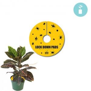 Lock Down Pads 1.5'' (15pcs)